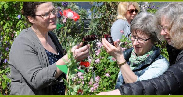 harrogate-flower-show